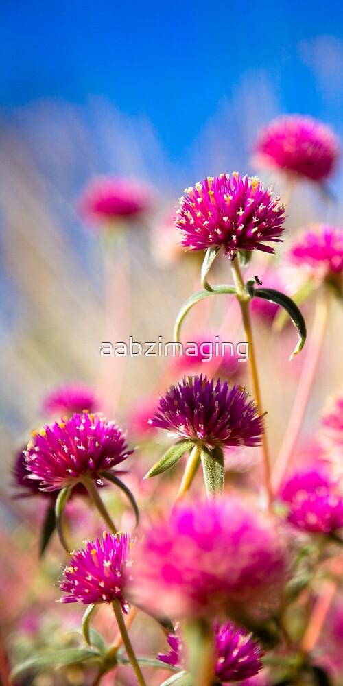 Wildflower Season by aabzimaging