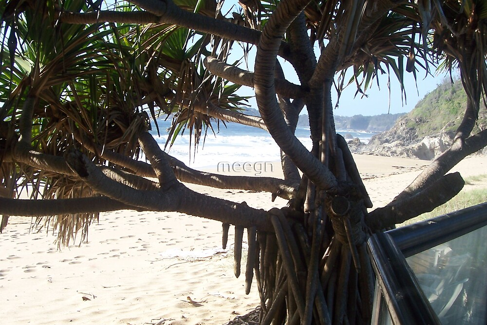 beach tree by meegn