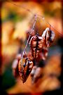 autumn seed by Anthony Mancuso