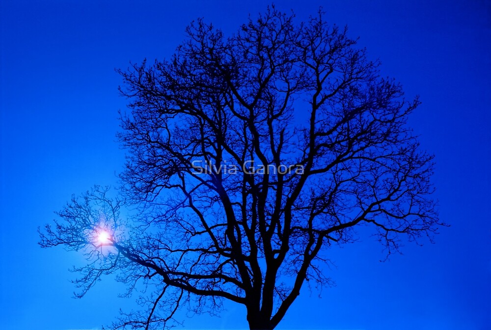 Tree in blue sky by Silvia Ganora
