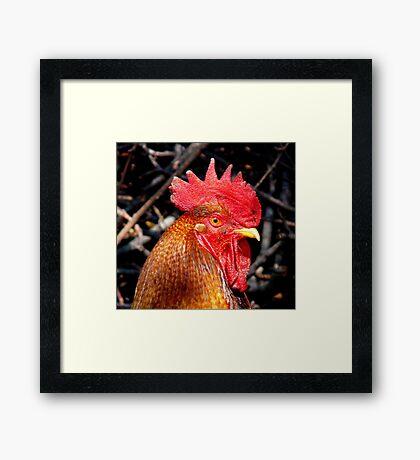 Red Barron Framed Print