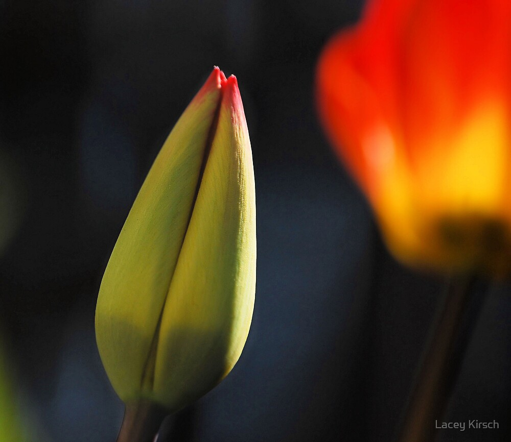 New Life by Lacey Kirsch