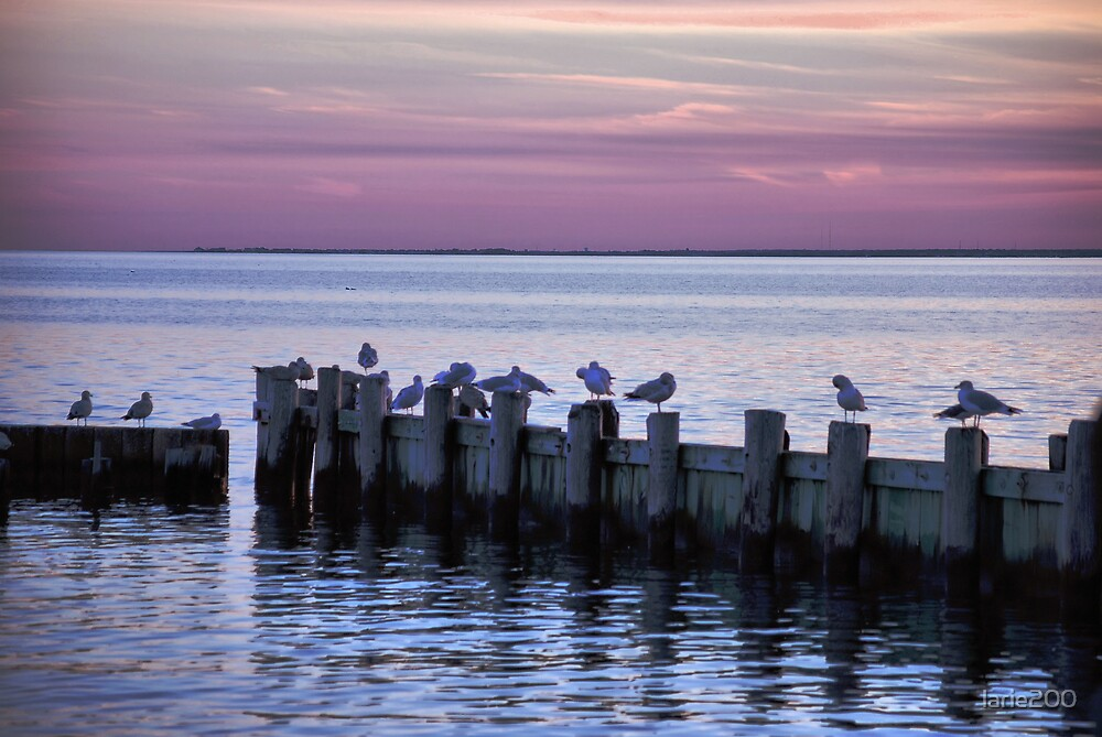 Seaguls at Sunset by larie200