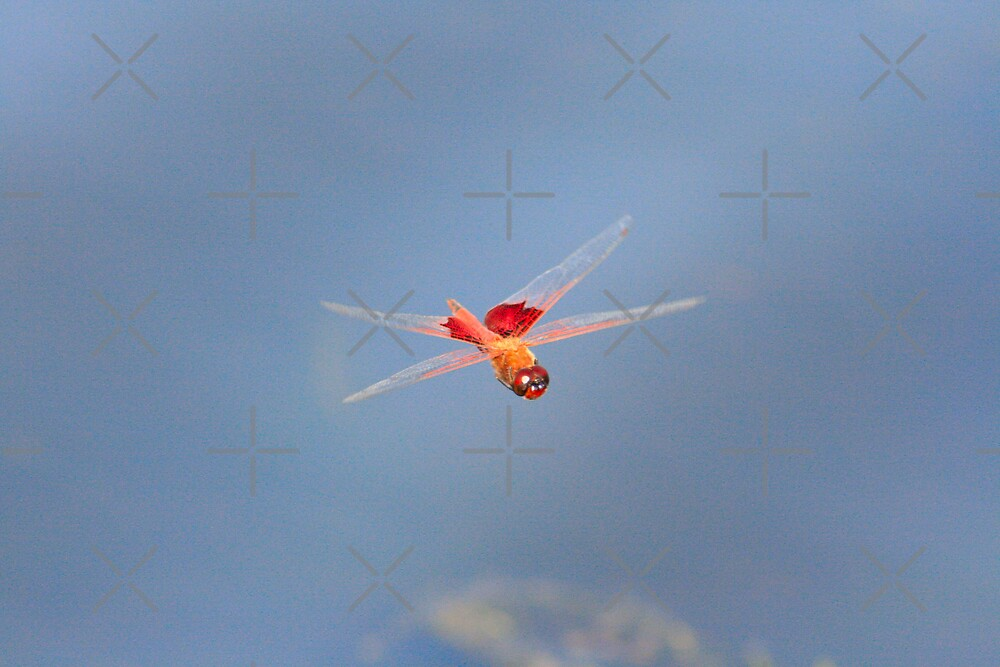 Glowing Red Dragonfly by connie campbell