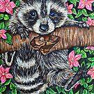 Raccoon by Rachelle Dyer