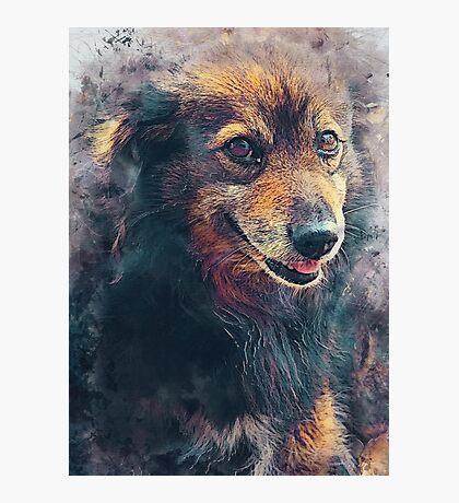 dog Berry #dog Photographic Print
