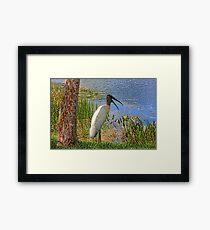 Bird Talk Framed Print