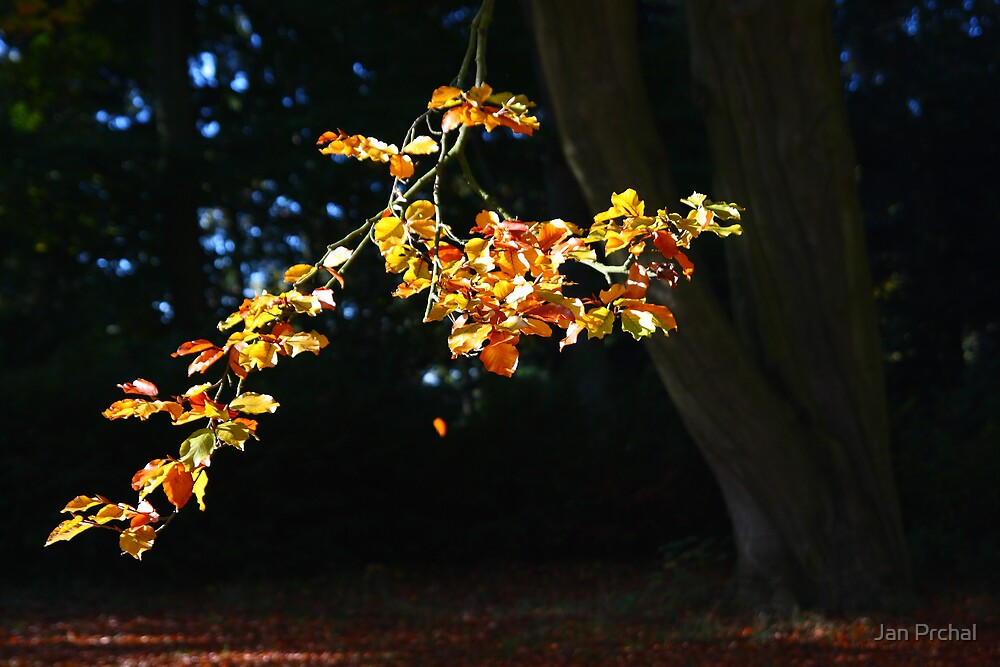 oak branch with yellow leaves by Jan Prchal
