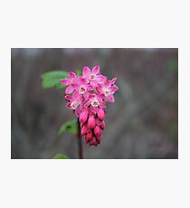 A Pink Flower Macro Photographic Print
