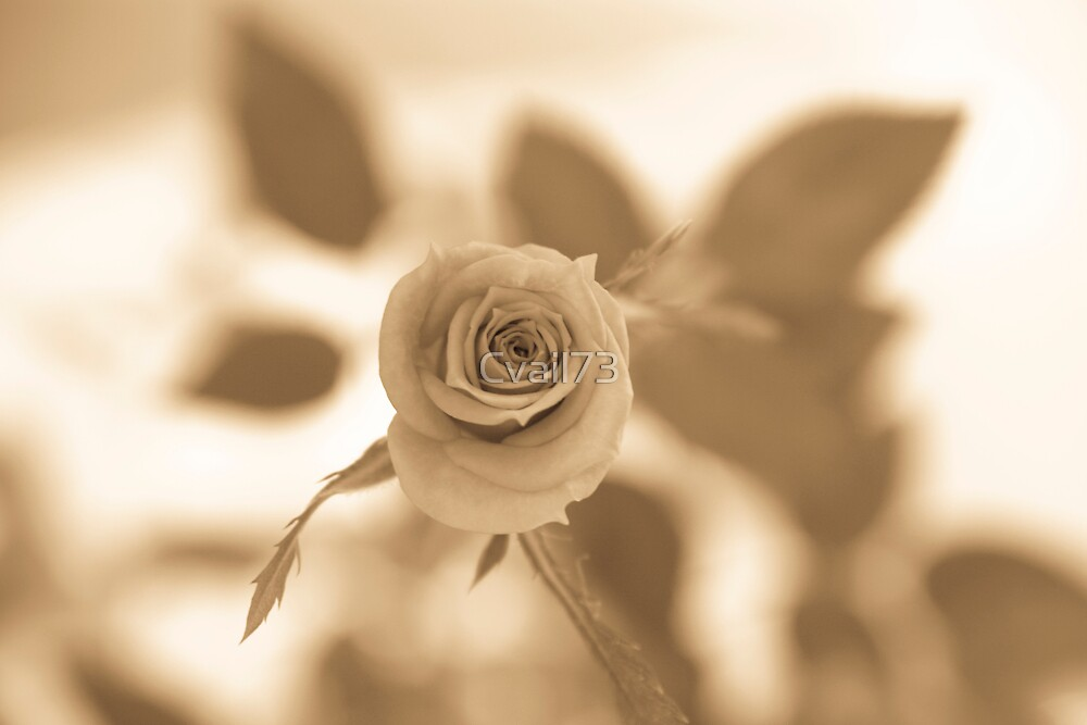 Rose sepia by Cvail73
