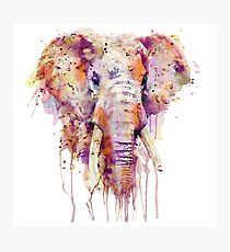 Elephant  Photographic Print