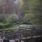 Meadow by jewelsofawe