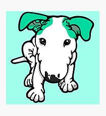 Aqua Eared Bull Terrier Puppy Photographic Print