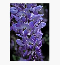 Painted Wisteria Photographic Print