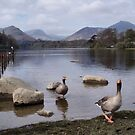 Geese on Keswick Lake by Deborah  Bowness