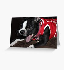 Kitana - Boston Terrier Greeting Card