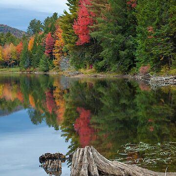 Fall Foliage / Colton Pond, VT by srwdesign
