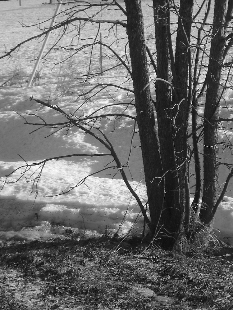 Winter Bliss by Sam Clarke