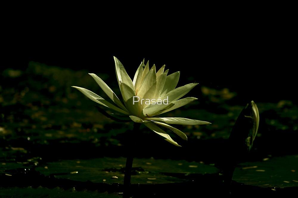 Inspired mind by Prasad