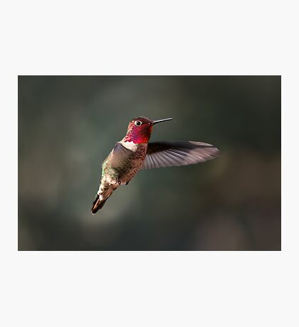 Hover Photographic Print