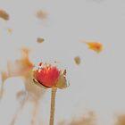Pretty Poppy by Deborah McGrath