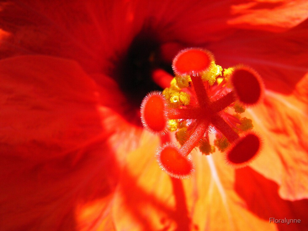 Hibiscus 4 by Floralynne
