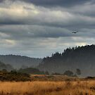 Mendocino Mists by Stuart Green