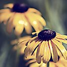 Daisies...Growing Wild in the Garden by Sherry Hallemeier