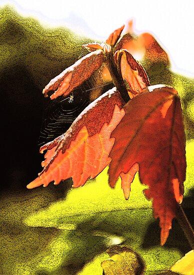 Spring Colours by MMerritt