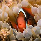 Nemo's Relative by aabzimaging