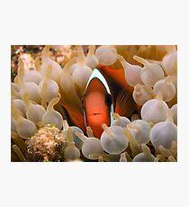 Nemo's Relative Photographic Print