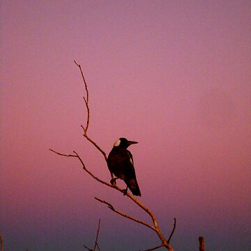 Dawn bird by ojoe