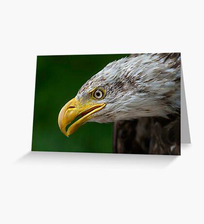 Bald Eagle Profile Greeting Card