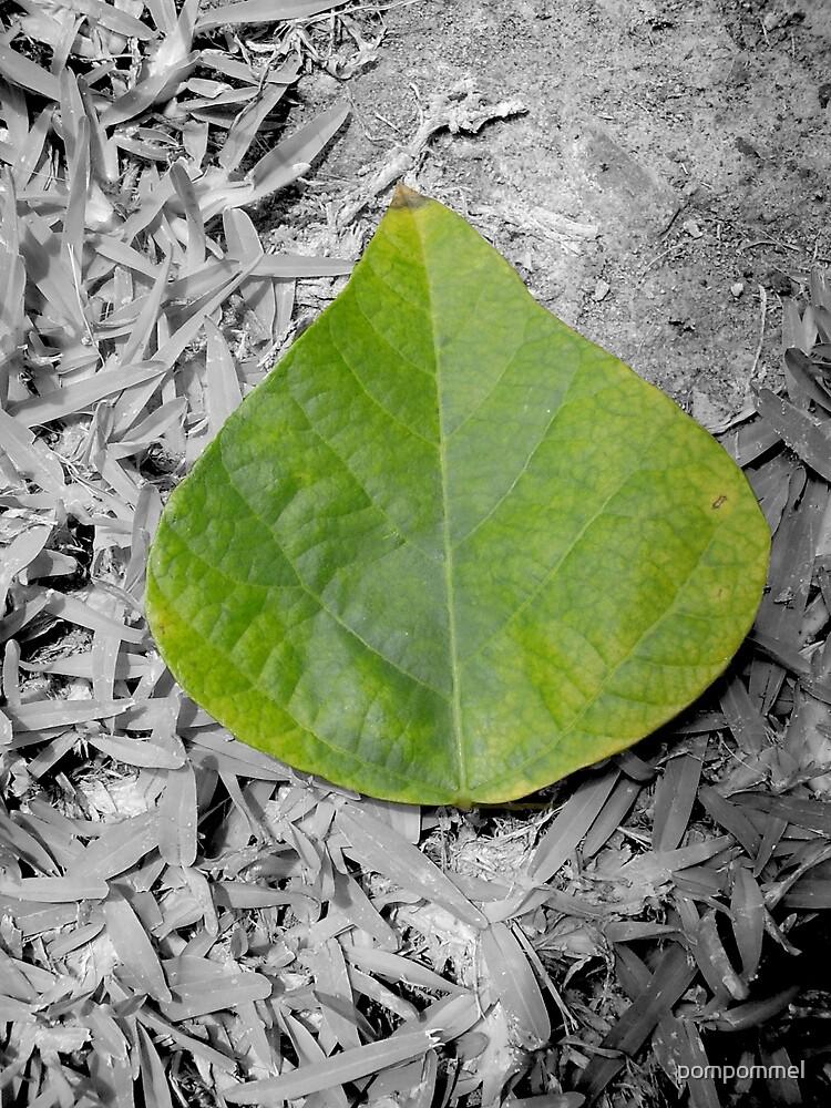 leaf by pompommel