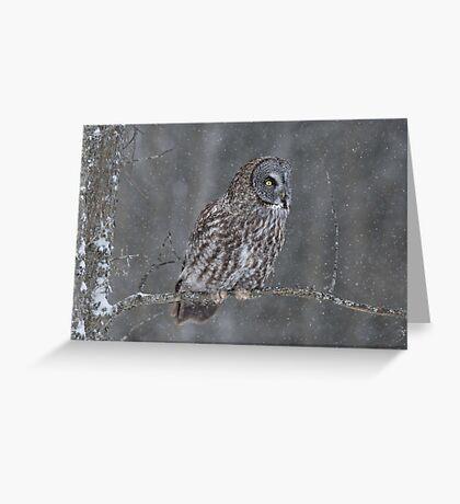 Perching Owl... Greeting Card
