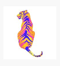 Retro color Animals Photographic Print