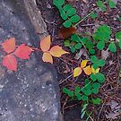 Leaves 006 by Nate Marks