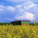 Honey home by JKomendanovic