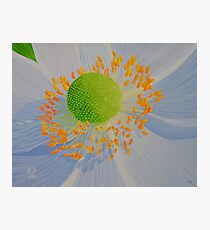 Blue Flower in macro Photographic Print