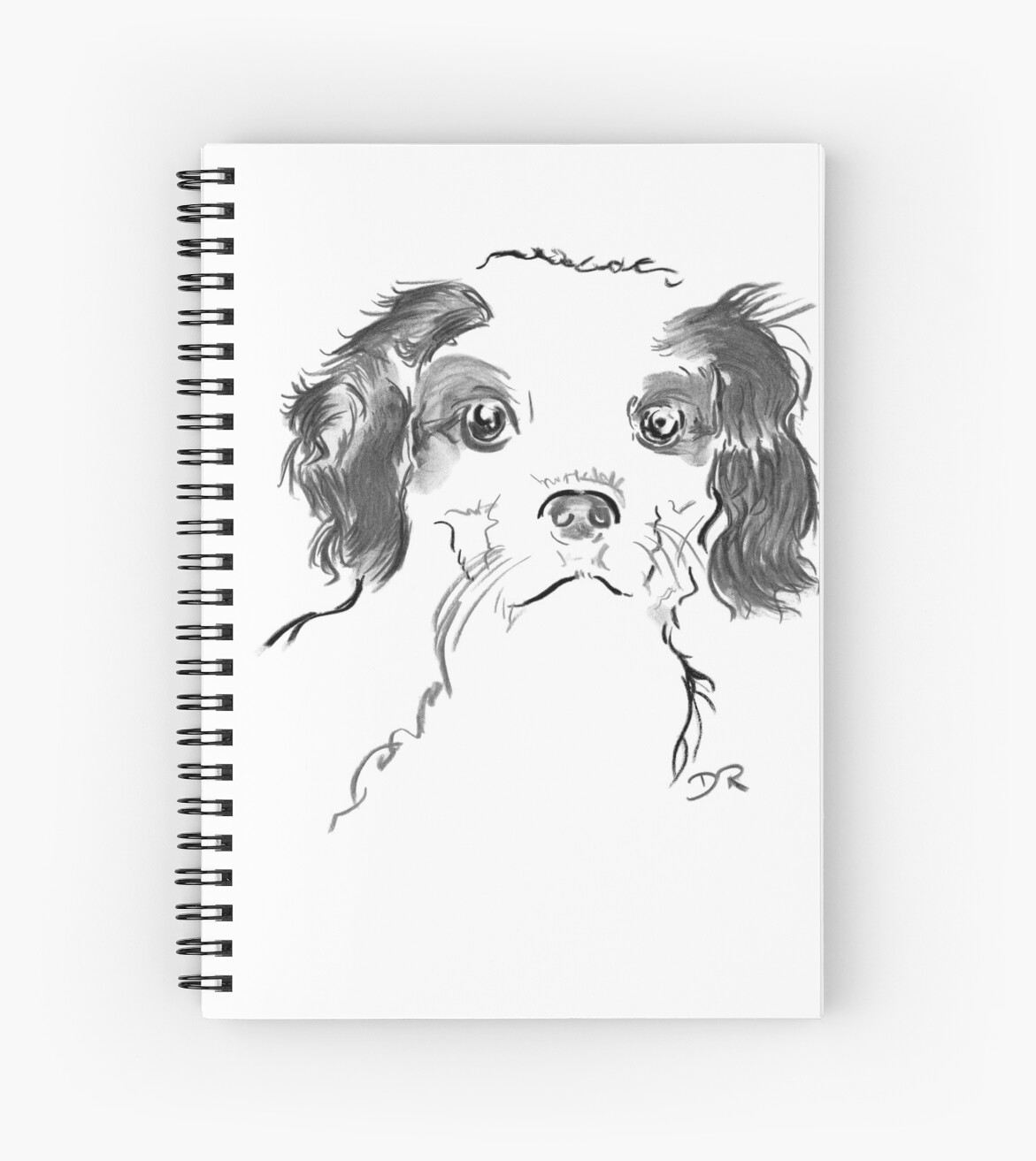 Cavalier King Charles Spaniel Puppy Drawing by Douglas Rickard
