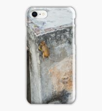 Playful Monkeys iPhone Case/Skin