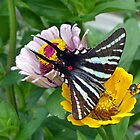 Zebra Swallowtail Butterfly by FrankieCat
