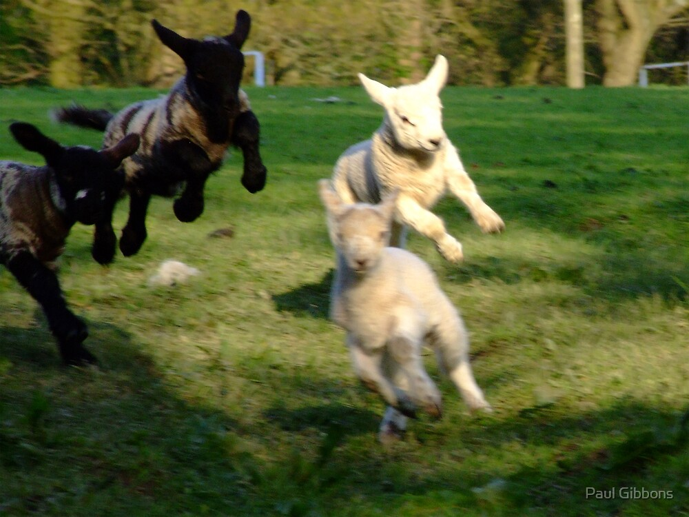 Leaping Lambs by spottydog06