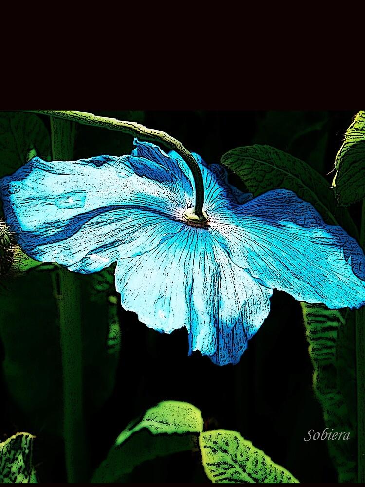 Shy Blue by rsobiera