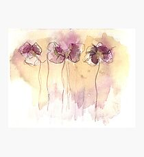 Fragrance - Abstract Flowers Watercolour Photographic Print
