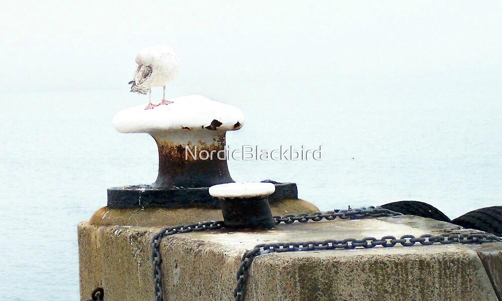 johnathan livingston seagull by NordicBlackbird