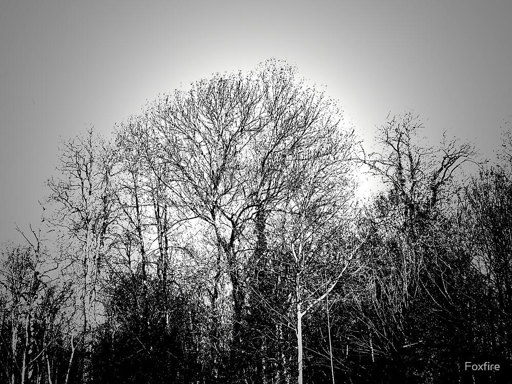 Tree by ©FoxfireGallery / FloorOne Photography