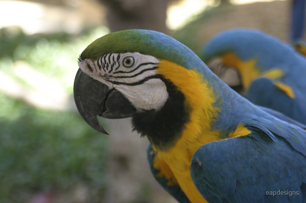 Macaw by eapdesigns