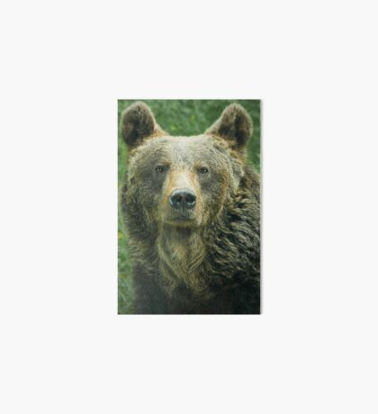 Eurasian Brown Bear Art Board