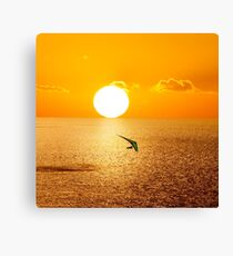 Soaring over the Pacific Canvas Print